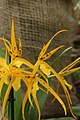 Orchid (32668829794).jpg