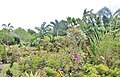 Orchid Gardens Bali, Indonesia - panoramio (12).jpg