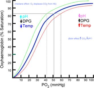 2,3-Bisphosphoglyceric acid - Image: Oxyhaemoglobin dissociation curve