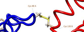 Phenylethanolamine N-methyltransferase - Image: PNMT Cysteine Disulfide Bond