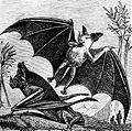PSM V07 D665 Vampire bat of south america.jpg