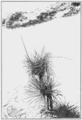 PSM V80 D221 Dagger weed adapting to changing soil level.png