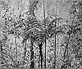 PSM V84 D296 Tree fern.jpg