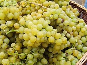 A grape: Palatina / Eine weiße Tafeltraubensor...