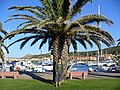Palau - Andrea in the port under a palm tree - panoramio.jpg