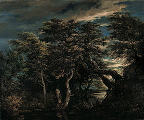 Marsh in a forest at dusk