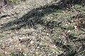 Paramiden von Stob d 20090407 007.JPG