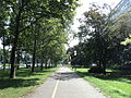 Park ispred Knjižnice Marina Držića.JPG