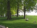 Parkland at Neasham Hall - geograph.org.uk - 1352003.jpg