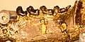 Paromomys maturus Gidley.jpg