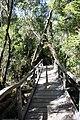 Pasarelas de madera en sendero El Tepual.jpg