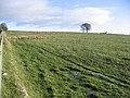 Pasture field - geograph.org.uk - 291844.jpg