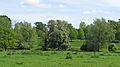 Pasture near Cherry Lane, Great Yeldham (geograph 4480869).jpg