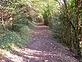 Path North of Woldingham - geograph.org.uk - 54729.jpg
