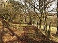 Path along edge of access land, Little Haldon - geograph.org.uk - 1167230.jpg