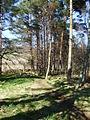 Path through Torphins Wood. - geograph.org.uk - 773549.jpg