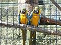 Perroquets (2363284943).jpg