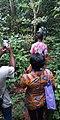 Photowalk Sanctuaires des singes de Drabo7.jpg