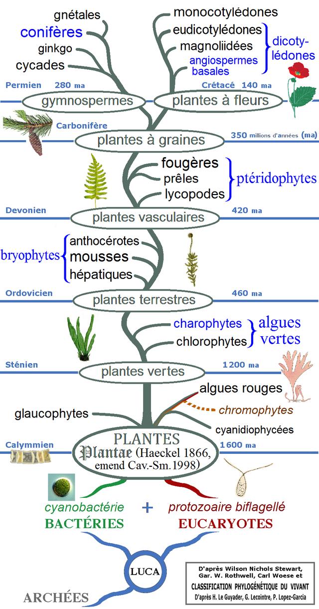 histoire évolutive des végétaux - wikiwand