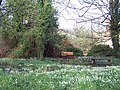 Picnic table amongst the snowdrops in Homington - geograph.org.uk - 335044.jpg