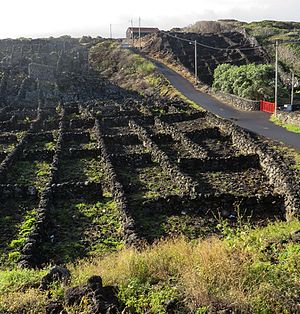 Landscape of the Pico Island Vineyard Culture - Image: Pico Island Vineyard 3