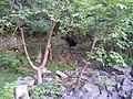 Pindale Cave - geograph.org.uk - 209712.jpg
