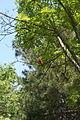 Pineta di Montecchio 2.jpg