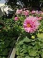 Pink flower 4.jpg