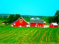 Pittz Farm - panoramio.jpg