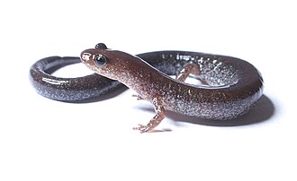 Charles Neaves, Lord Neaves - Image: Plethodon cinereus