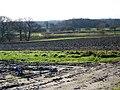 Plough near Moreton - geograph.org.uk - 1636819.jpg