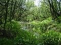 Poland. Gmina Konstancin-Jeziorna. Vistula 020.jpg