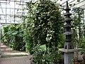 Poland. Warsaw. Powsin. Botanical Garden 157.jpg