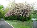 Pollok Park - geograph.org.uk - 1292509.jpg