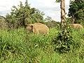 Polonnaruwa, Sri Lanka - panoramio (80).jpg