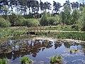 Pond, Rendlsham Forest - geograph.org.uk - 911599.jpg