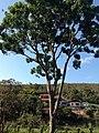 Posse, Teresópolis - RJ, Brazil - panoramio (20).jpg
