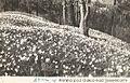 Postcard of Golica 1962.jpg