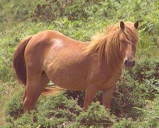 Chestnut (horse color) Horse coat color