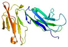 Protein FCGR2A PDB 1fcg.png