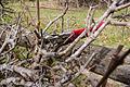 Pruning Shears.jpg