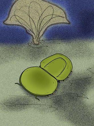 Pseudonaraoia - Image: Pseudonaraoia hammoni reconstruction