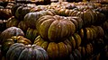 Pumpkins in storage.jpg