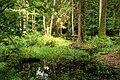 Puszcza białowieska fragmenty rezerwatu ścisłego a5.JPG