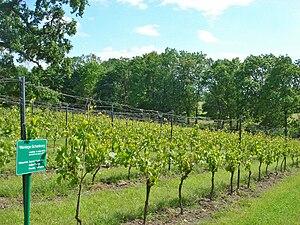 Stargarder Land (wine region) - Vineyards at Rattey manor