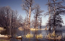 Reelfoot Lake.jpg