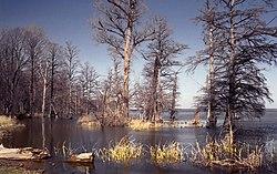Reelfoot Lake Tennessee Map.Reelfoot Lake Wikipedia