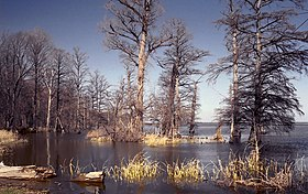 Image illustrative de l'article Parc d'État de Reelfoot Lake