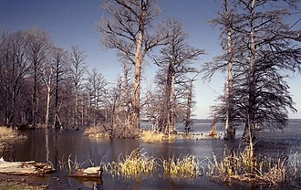 Reelfoot Lake - Image: Reelfoot Lake