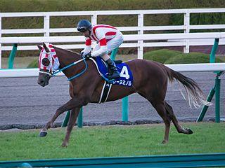 Reine Minoru Japanese Thoroughbred racehorse